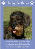 "Miniature Wire Haired Dachshund-Happy Birthday - ""I'm Adopted"" Theme"